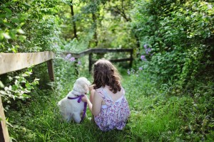 perros-aptos-convivencia-con-niis